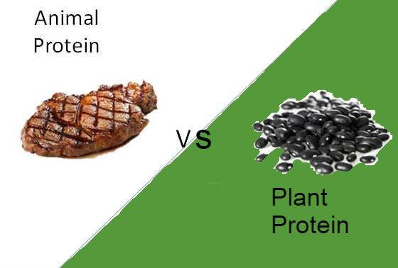 animal-vs-plant-protein-part 2